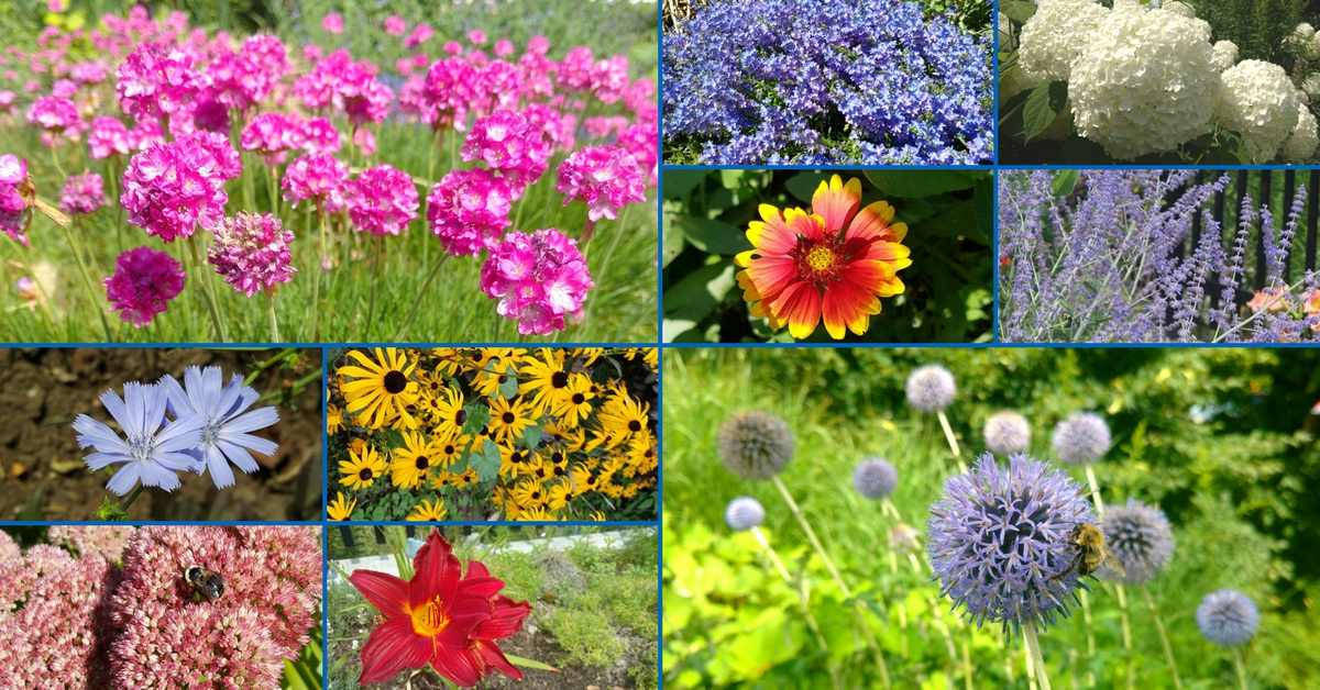 A collage of water wise flowers from the Water Conservation Garden