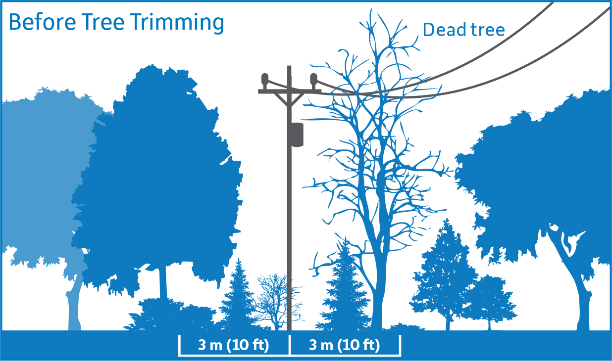Diagram showing before tree trimming. Vegetation is encroaching upon the 3 meter safe limits.