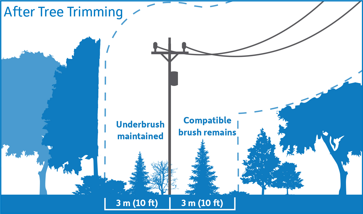 Diagram showing after tree trimming. Vegetation within the 3 meter safe limits has been removed