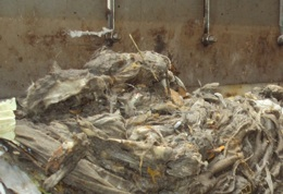 wipes clogging a water treatment plant screen